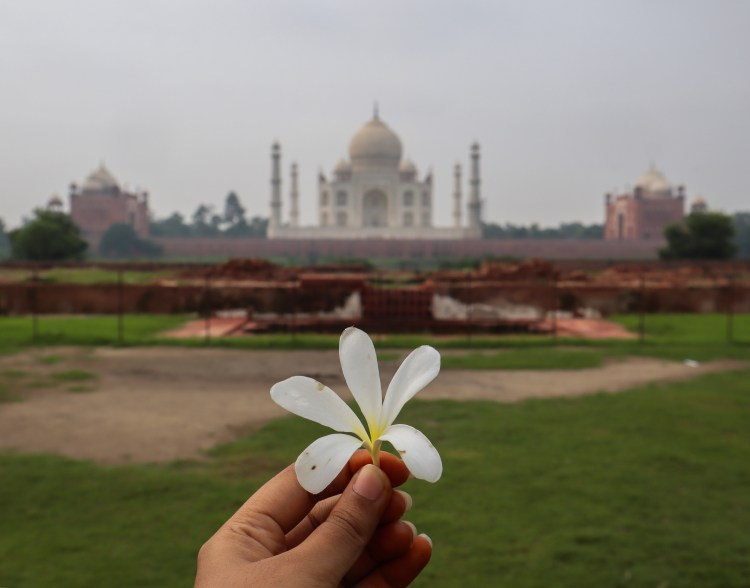 Best Taj Mahal View from Mehtab Bagh