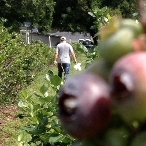 Mike_picking_berries