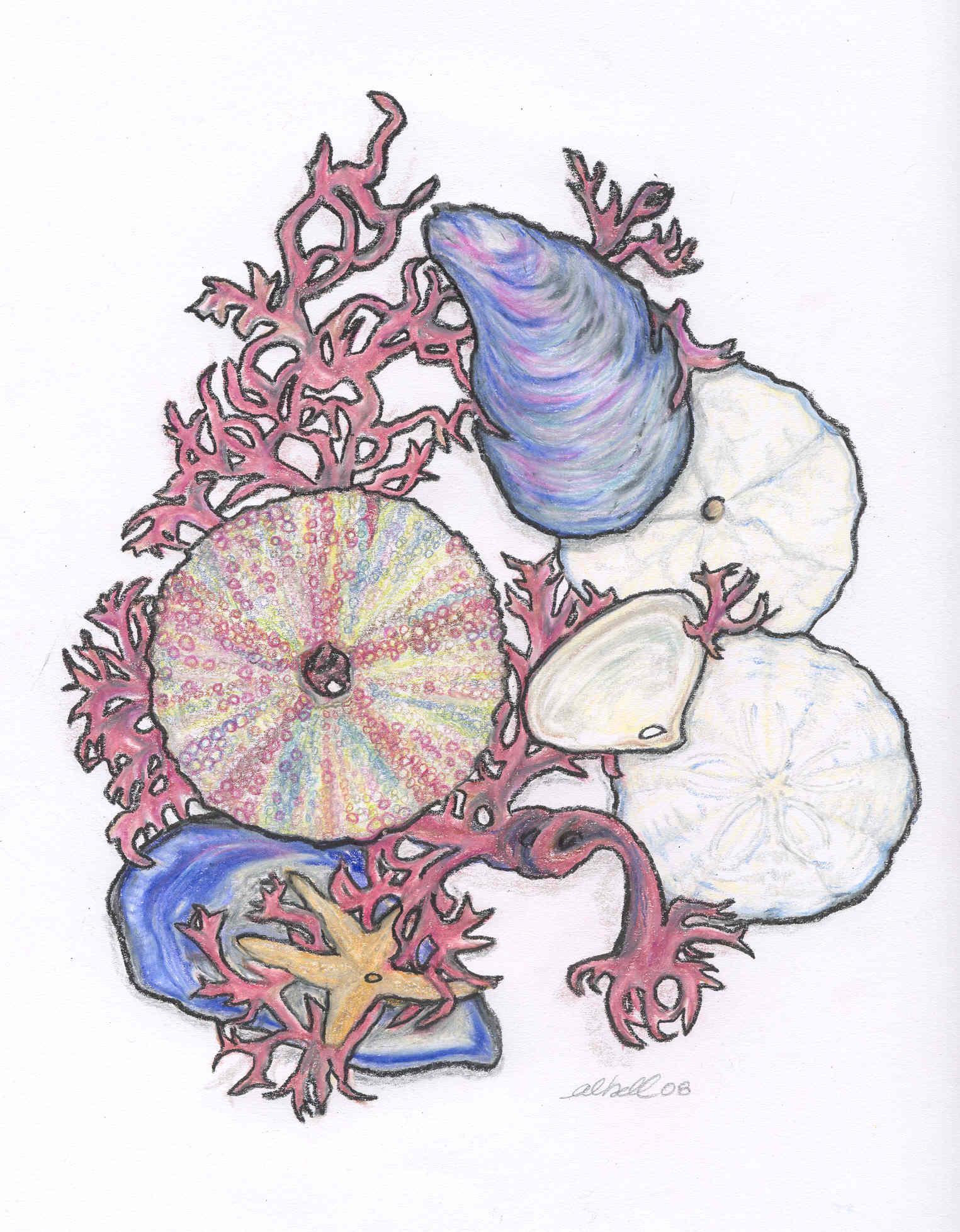 seaweed-and-shells
