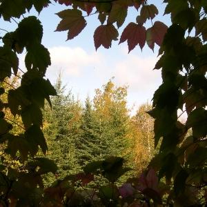 autumn through living room window