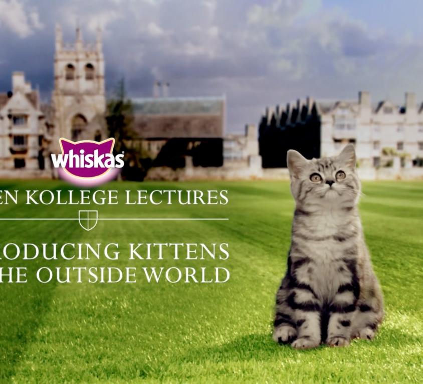 Kitten Kollege Lectures