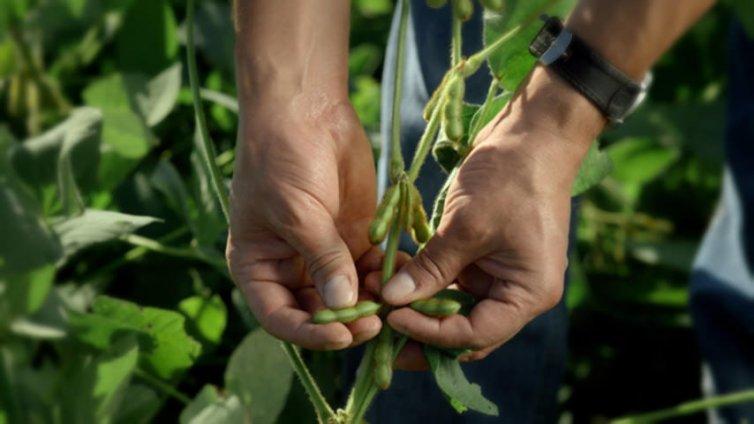 ILeVO Seed Treatment