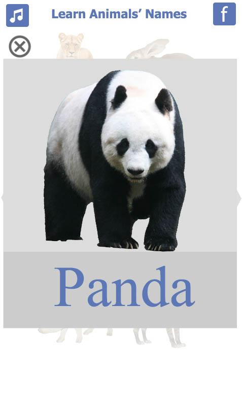 تعليم-أسماء-الحيويانات-باللغة-الانجليزية-Panda