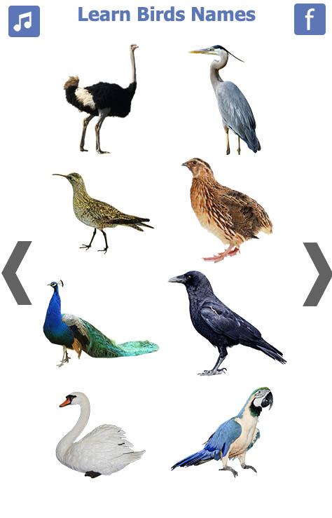 اسماء-الطيور-انجليزي-1