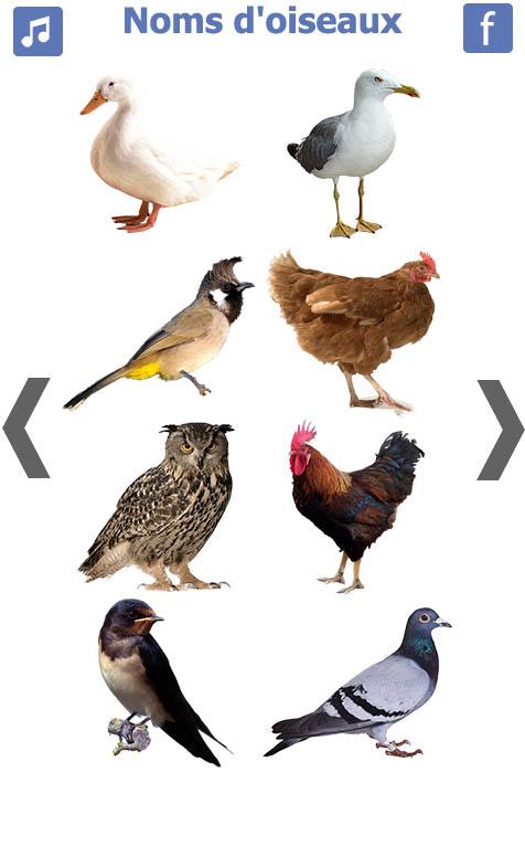 تعليم-الطيور-باللغة-الفرنسية-2
