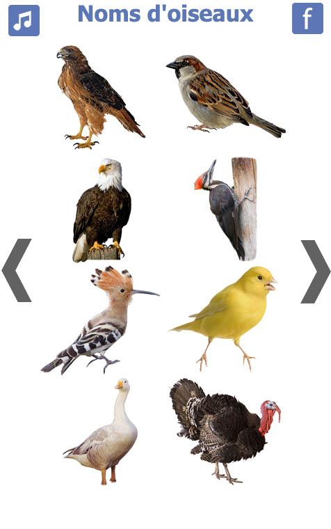 تعليم-الطيور-باللغة-الفرنسية-3
