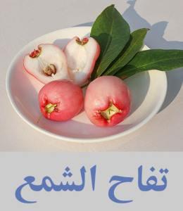 تفاح الشمع أنواع الفواكه واسمائها - أسماء فواكه غريبة