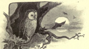 Illustration of an owl from 'Inmates of my house and garden' by Mrs. Brightwen; illustrated by Theo. Carreras.