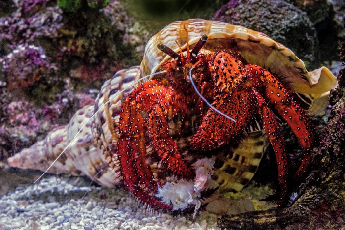 Unusual Structures in Flashery – A Hermit Crab Workshop
