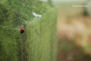 Ladybug, Gregynog Hall, Wales (October 2014)