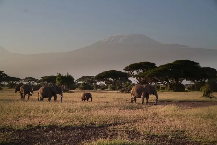 the beautiful Amboseli Park with elephants and backdrop of Mount Kilimanjaro