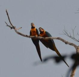 Macaw magic