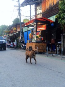 Feral dog walking the streets in Pai Thailand