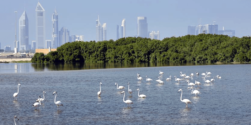 Activities for Nature Lovers in Dubai