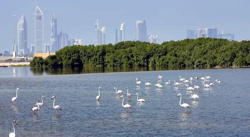 Nature places in Dubai