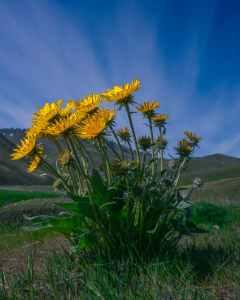 landscape field summer sun