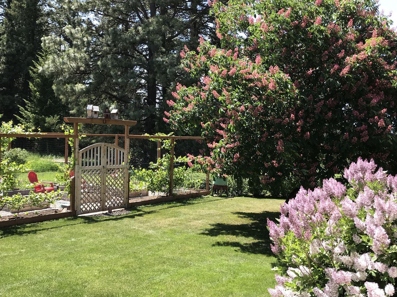 Backyard Gate in the Spring