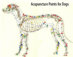 acupuncture dog chart