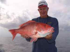 Sarasota Fishing Charter Snapper Fishing
