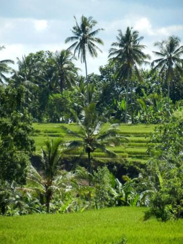 Dawn in Ubud