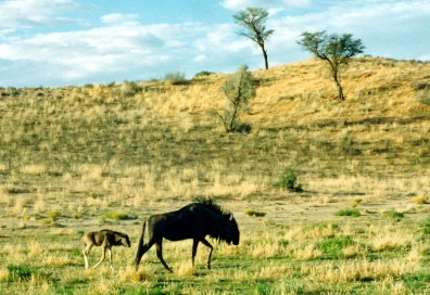 Kalihari National Park