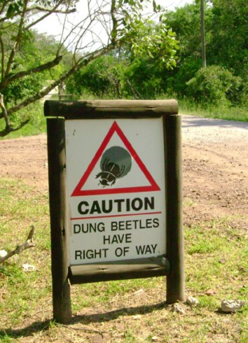 Look Out! - Dung Beetles