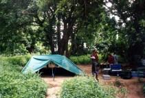 Camp Ant