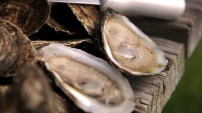 Carolina Mariculture   Cedar Island, NC : Flavor, NC