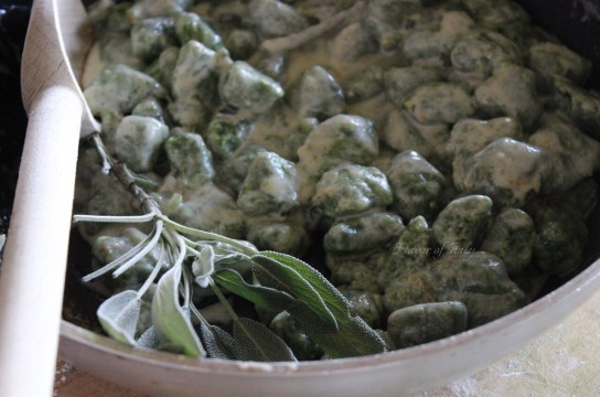 Gorgonzola and sage gnocchi with cream sauce