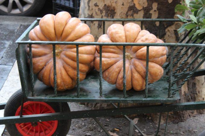 Pumpkins for pumpkin ice cream