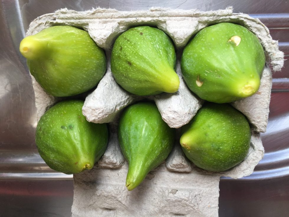 Fresh figs kept in an egg carton stay fresh and plump
