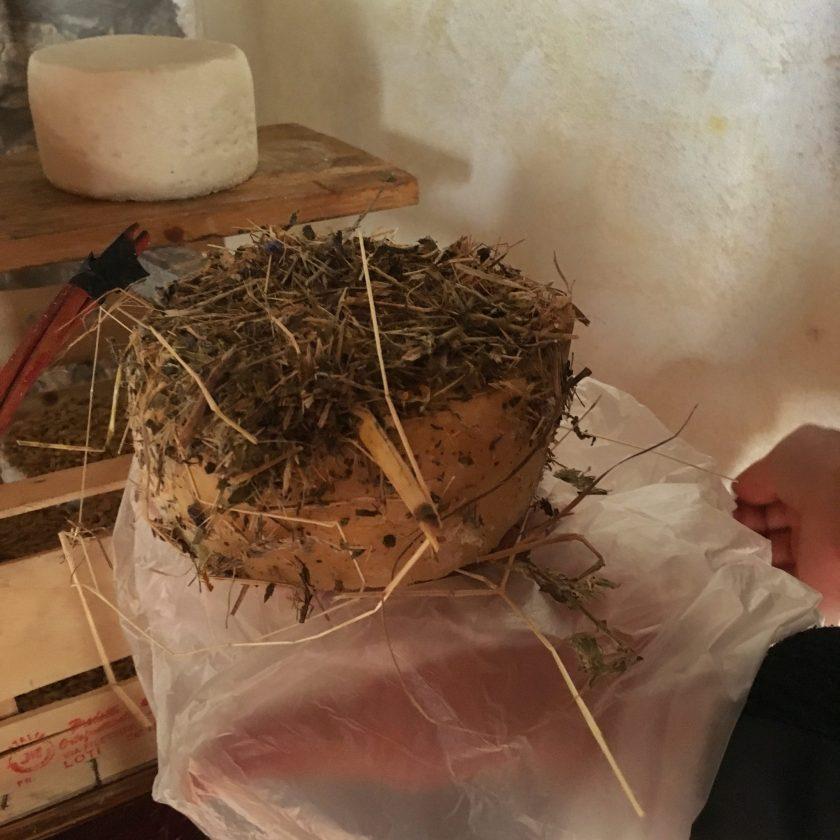 pecorino cheese aging in hay