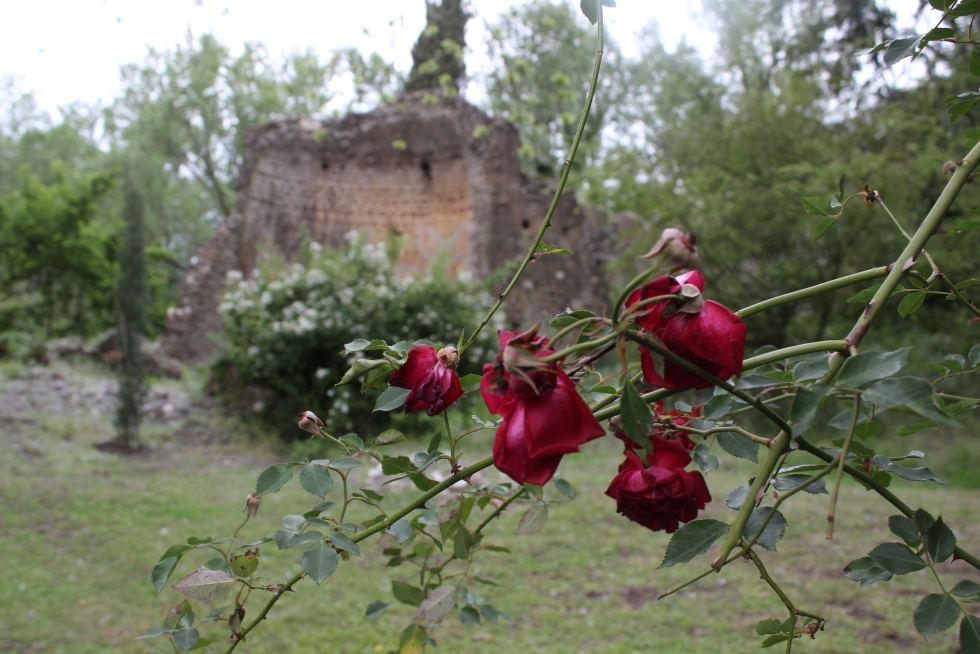Red roses and ruins at the Ninfa Gardens
