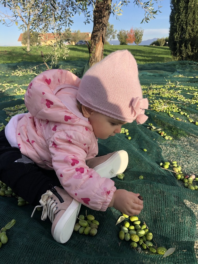 This is how the youngest family members get involved in the Italian olive harvest