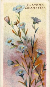 Flax or linseed, Players cigarette card