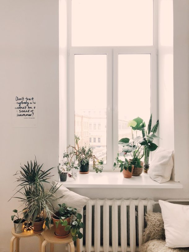 A small indoor meditation garden with green plants