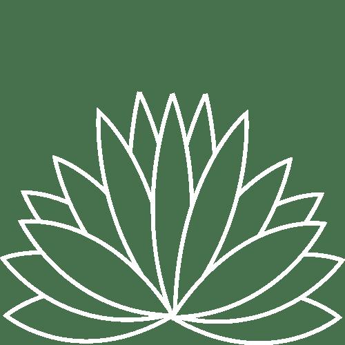 Flecha Azul - the field process- Agave Plant