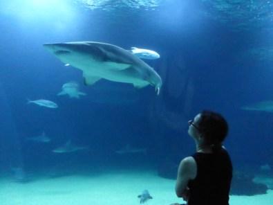 Oceanografico_Hai