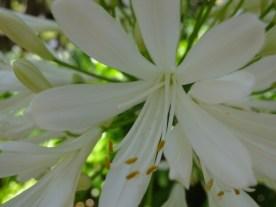 Wellington Botanischer Garten4