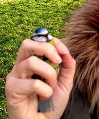 Steph holding a blue tit