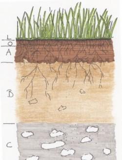 Bodenhorizonte als Skizze dargestellt.