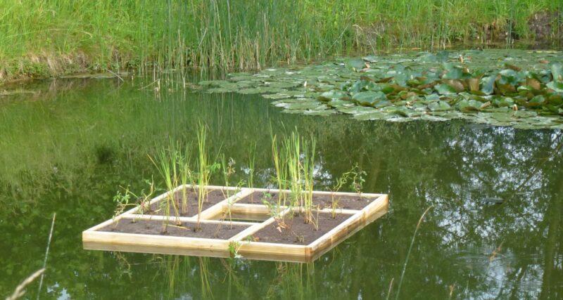 Bepflanzte Schwimmplattform sind ideal für Teiche. Sie lassen sich auch miteinander verbinden.
