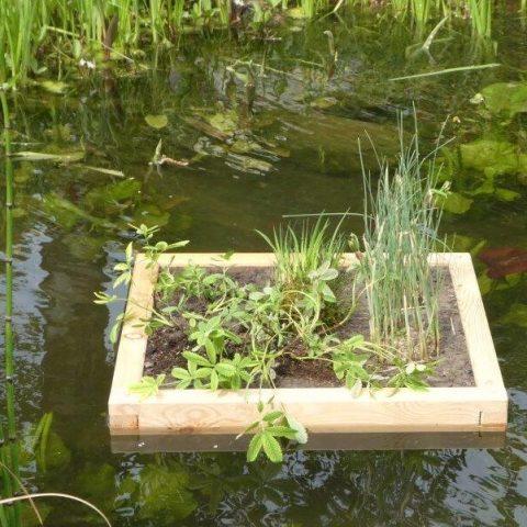 Bepflanzte Schwimminsel Teichreinigung quadratisch