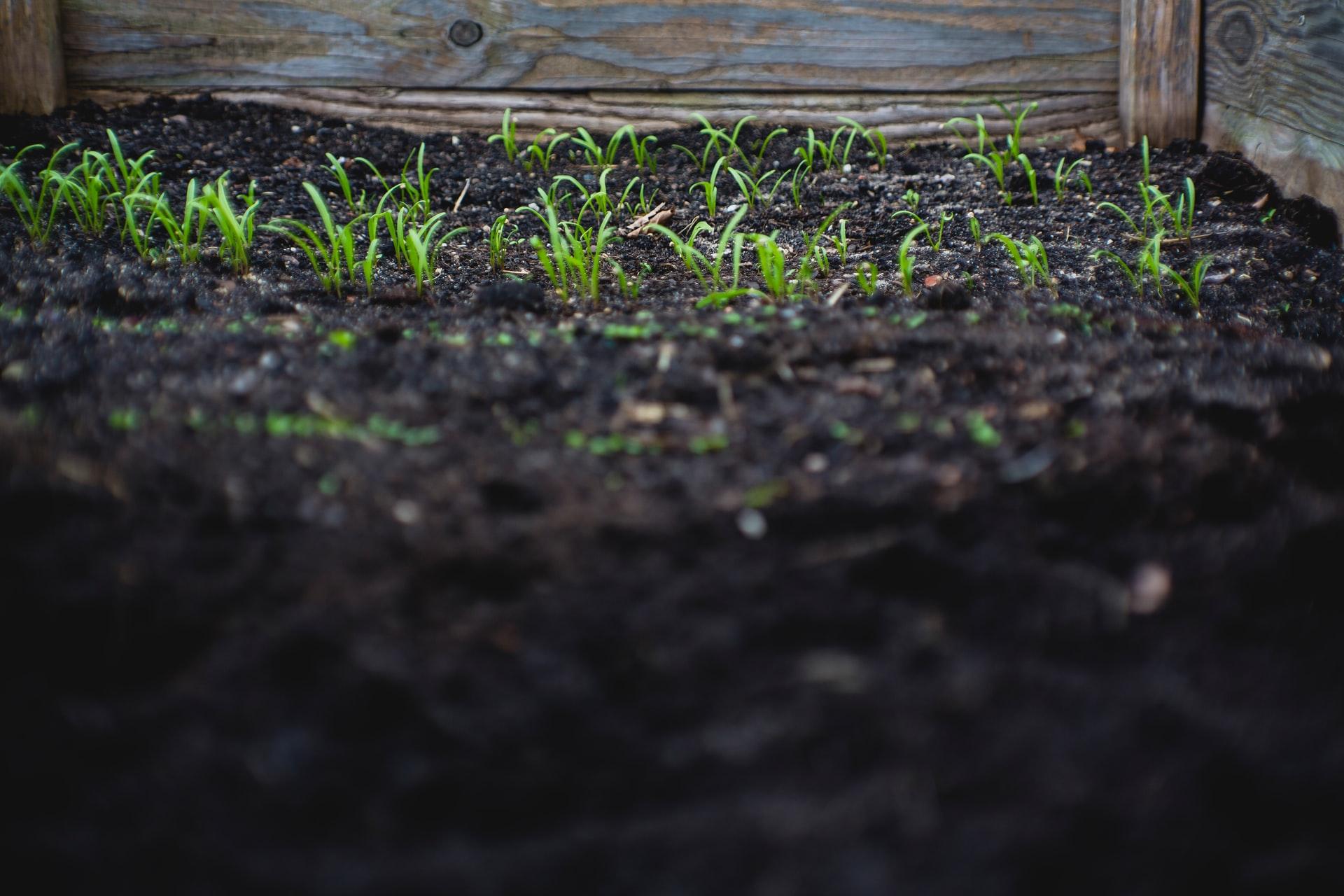 Viel Fläche für Beikräuter bei unbedecktem Boden