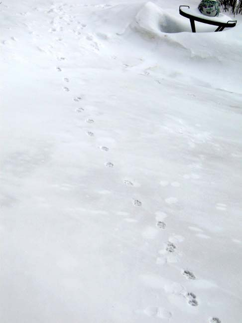 footprints001web.jpg