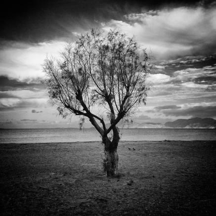 Tree | Kos 2014