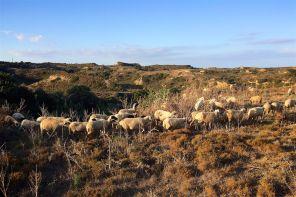 Pastorale   Kos 2014