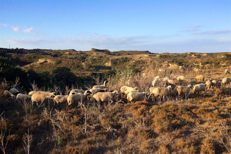 Pastorale | Kos 2014