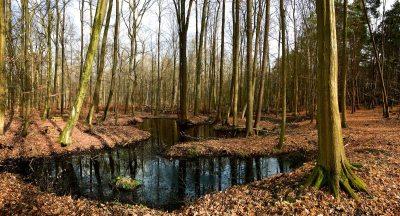 Rostocker Heide | 2016