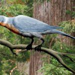 Tisíc let bez lesů. Evoluční minulost ptáků ukazuje pravý rozsah vymírání na konci křídy.